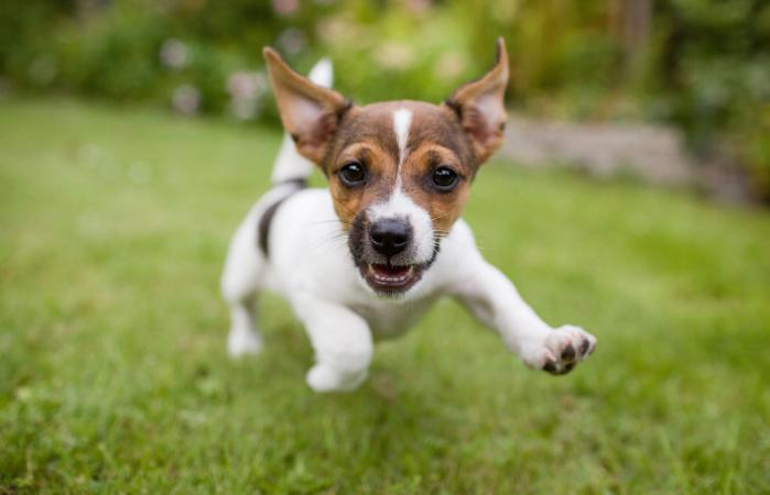 Cachorro feliz corriendo