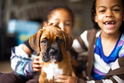 Cachorro boxer y niños