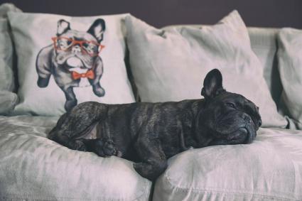 Perro triste en el sofá