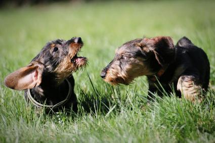 Perros al aire libre