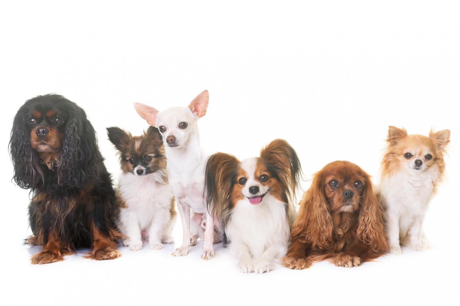 Perros de varias razas