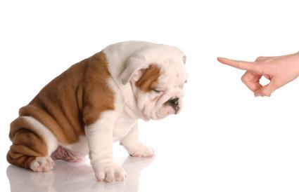 Entrenando al cachorro
