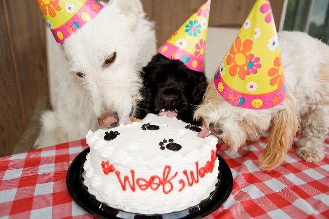Tres perros comiendo pastel