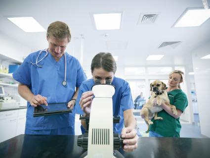 Veterinarios mirando un análisis de sangre