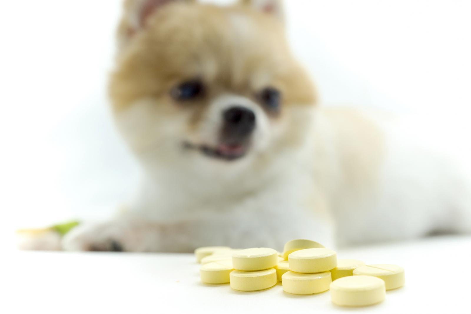 Perro con pastillas