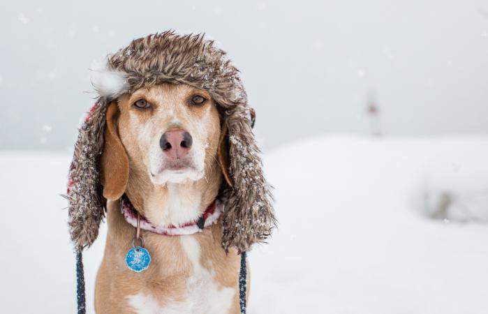 Perro con gorro de invierno