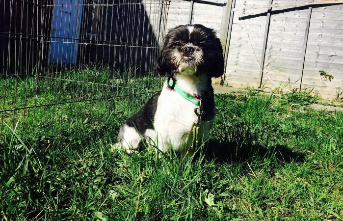 Perro sentado en superficie exterior