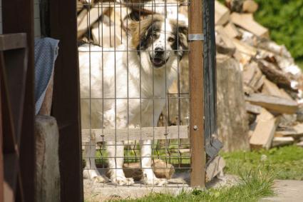 Piso de concreto para tus perros