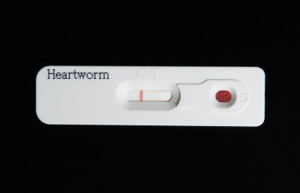 Prueba del gusano del corazón