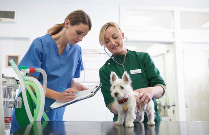 Veterinaria y enfermera examinan perro