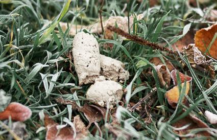 caca de perro blanco en la hierba