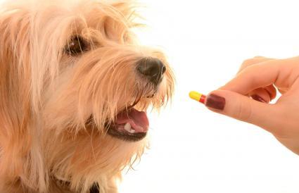 Perro recibiendo medicamento