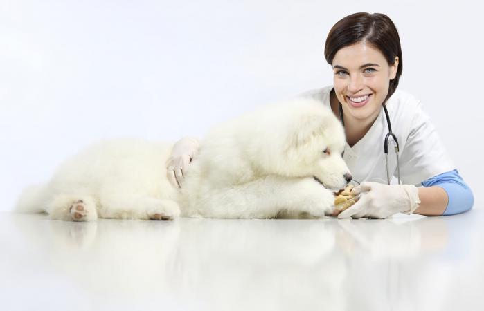 Veterinaria alimentando perro enfermo