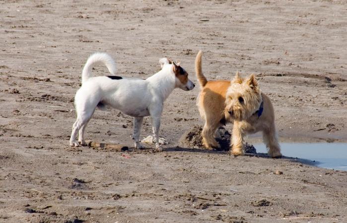 Perro olfateando a otro perro