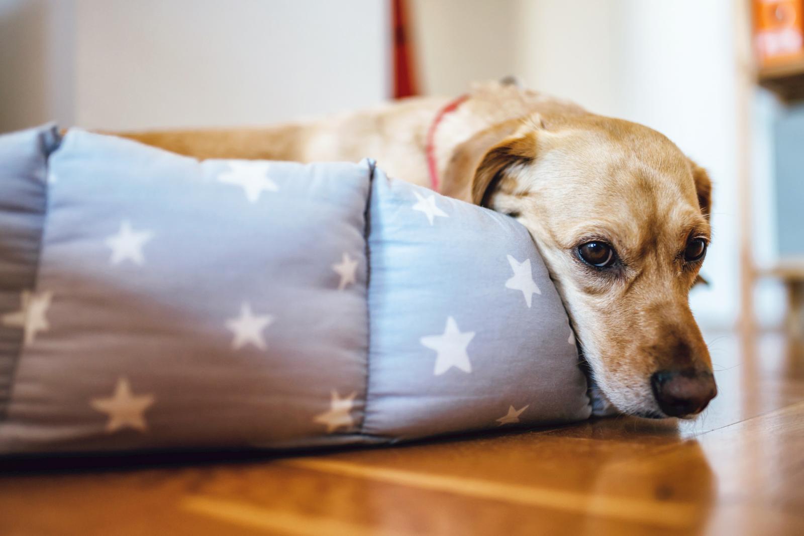 Perro tumbado en su cama