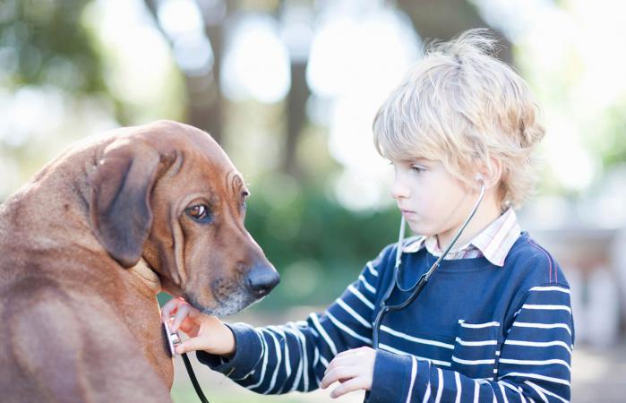 Niño usando estetoscopio en un perro