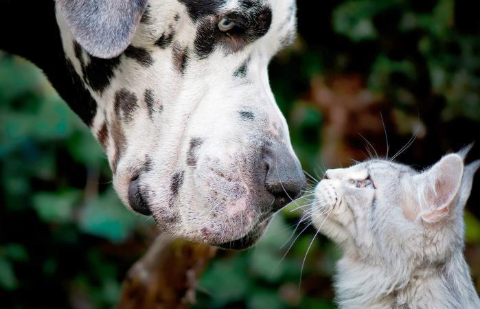 Perro y gato mirandose