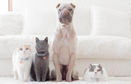Familia de perro y gatos