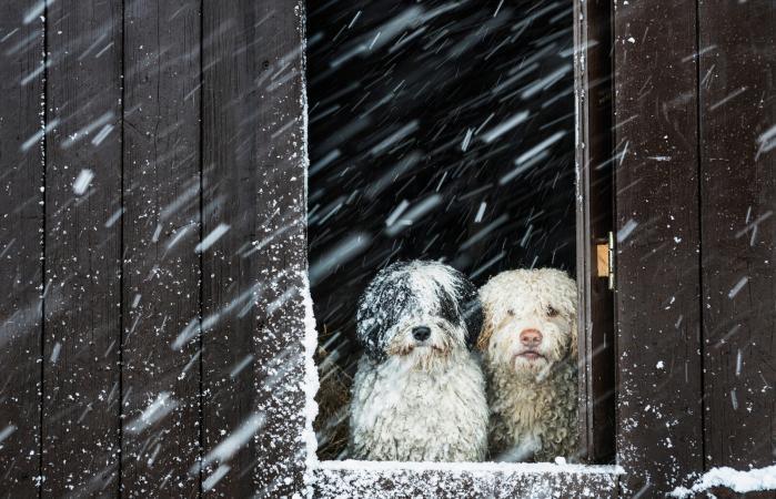 perros observando la nieve