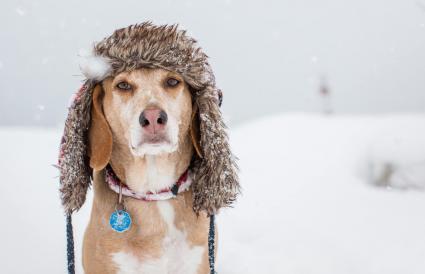 Perro con un sombrero