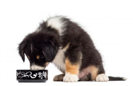 Cachorro comiendo de un cuenco