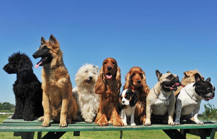 grupo de cachorros de perros