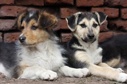 Cachorros de razas mixtas
