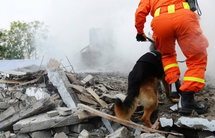 Perro de rescate buscando restos de un edificio