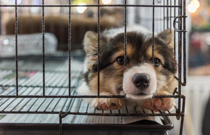 Cachorro en una jaula