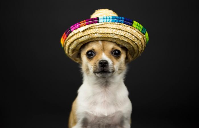 Perro con sombrero mexicano