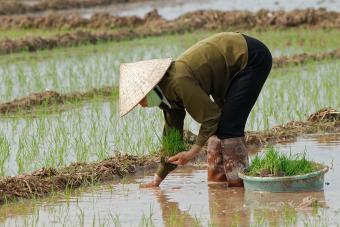 https://cf.ltkcdn.net/photography/images/slide/234891-850x567-10-Vietnam-Rice-Paddi.jpg