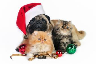 Christmas Pet Photography
