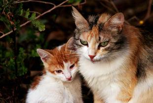 Reducedcats.jpg