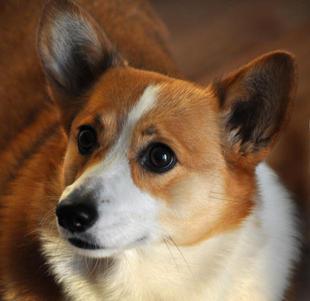 Avoiding Pet Photo Flash Eye