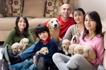 https://cf.ltkcdn.net/photography/images/slide/62565-850x565-dogs.jpg