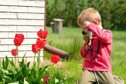 Photographing tulips.