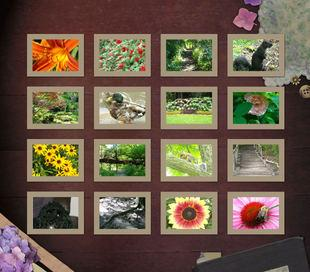 Edit photos and create collages for free.