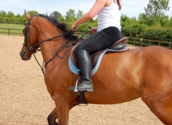 Plus Size Equestrian Clothing