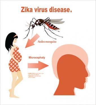 Zika virus transmission