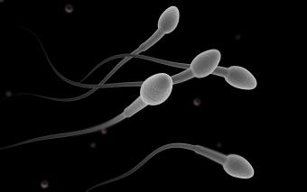 Does Sperm Die When Exposed to Oxygen?