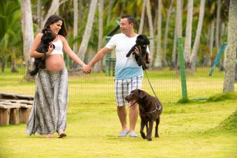 pregnant couple walking with dogs