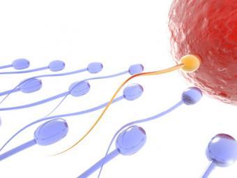 The Shettles Method of Baby Gender Selection