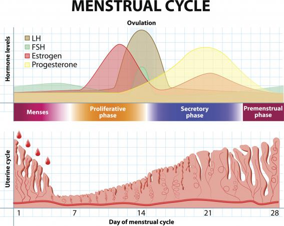 Can you get pregnant straight after finishing your period