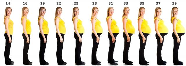 pregnancy belly growth