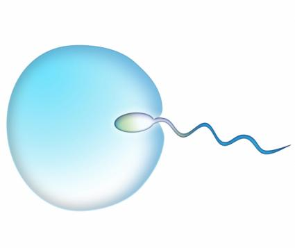 Egg being fertilized by a sperm