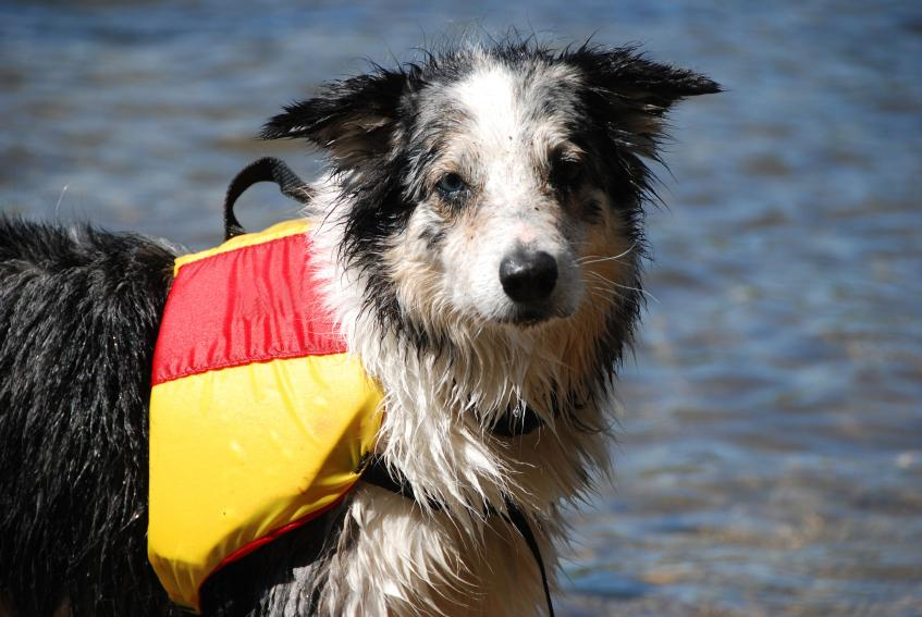 https://cf.ltkcdn.net/safety/images/slide/147659-847x567r1-DogWaterSafety.jpg