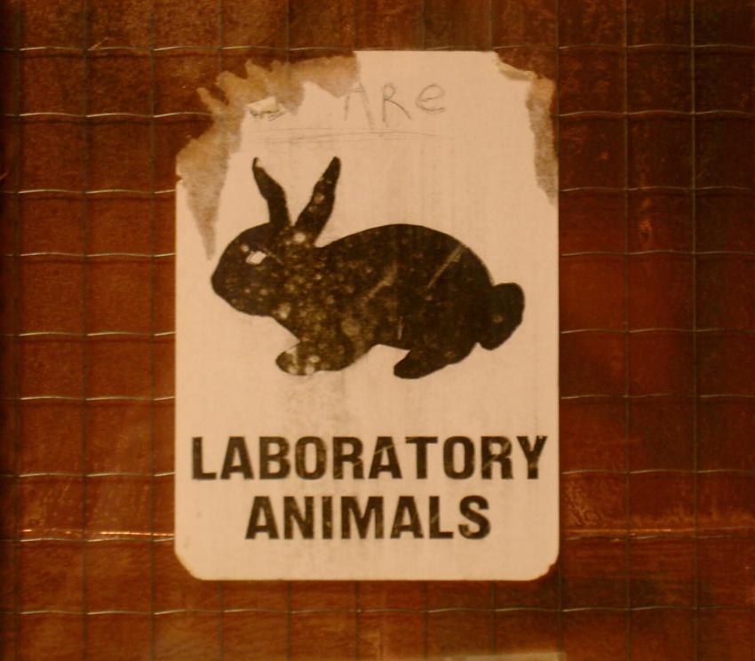 https://cf.ltkcdn.net/safety/images/slide/253268-850x744-13-important-lab-safety-symbols.jpg