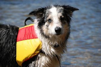 https://cf.ltkcdn.net/safety/images/slide/147659-847x567r1-DogWaterSafety.jpg