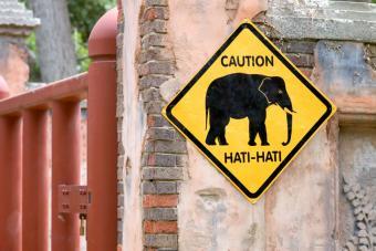 https://cf.ltkcdn.net/safety/images/slide/147663-848x566r1-ElephantCrossing.jpg