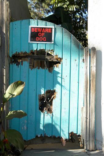 https://cf.ltkcdn.net/safety/images/slide/170043-567x850-Beware-of-Dog.jpg